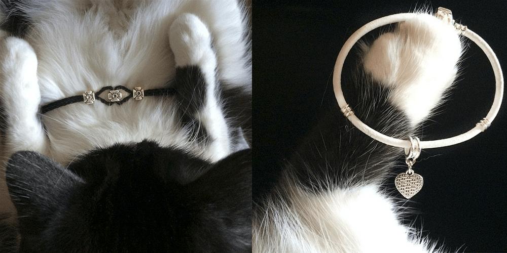 long-cats_2 (1)